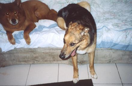 Missy and Lady, July 2003
